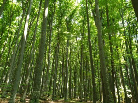 padure lemn