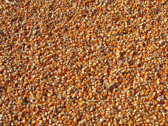 porumb, cereale