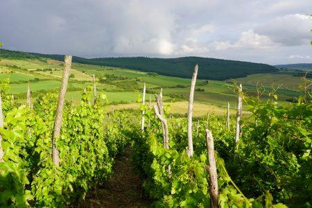 Casa de vinuri Zaig - o gură de vin dintr-o viță-de-vie veche de 100 de ani